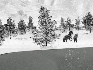 24 Frames review: Abbas Kiarostami's living, parting miniatures