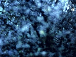 Nathaniel Dorsky's Arboretum Cycle: the photosynthesis of film - image