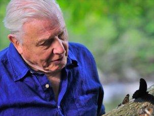 Sir David Attenborough and British TV dramas honoured at prestigious Peabody Awards - image