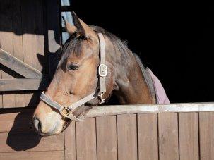 Dark Horse: mischief in the sport of kings - image