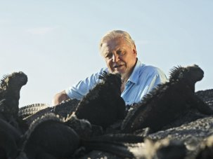 Attenborough talks 3D at first 3D Creative Summit - image