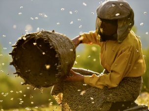 BFI Recommends: Honeyland
