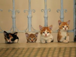 Seven of the most adorable cats in Istanbul. This must be the purr-fect documentary - image