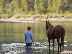 Film of the week: Lean on Pete, an intimate teenage oater - image