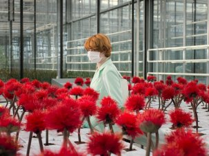 Where to begin with Jessica Hausner - image