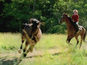 Berlinale first look: Out Stealing Horses recounts a golden summer touched with tragedy - image