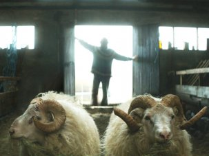 Film of the week: Rams - image