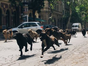 Fall of the wild: a brief history of dogs on film - image
