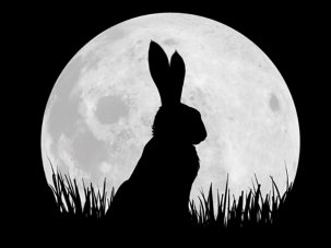 Watership Down competition