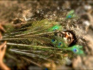 Festival gem: Papilio Buddha - image