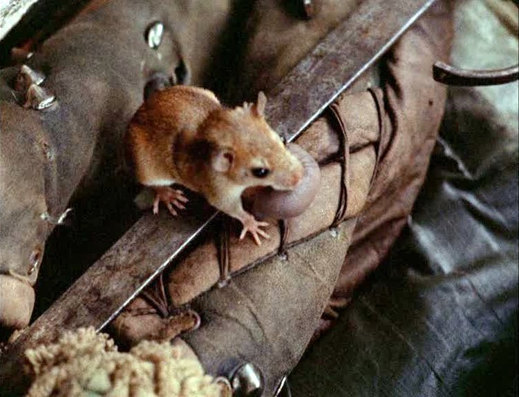 A mouse holding its young onboard the raft in Aguirre, Wrath of God (1972)