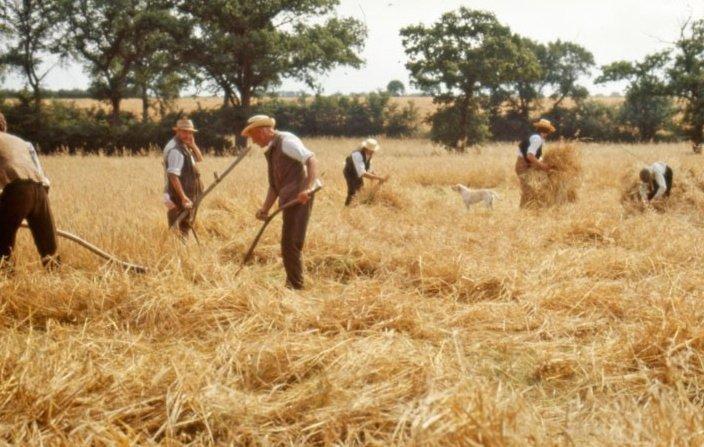 Akenfield (1974)