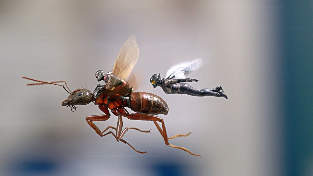 Paul Rudd, Evangeline Lilly and a flying ant in Ant-Man and the Wasp
