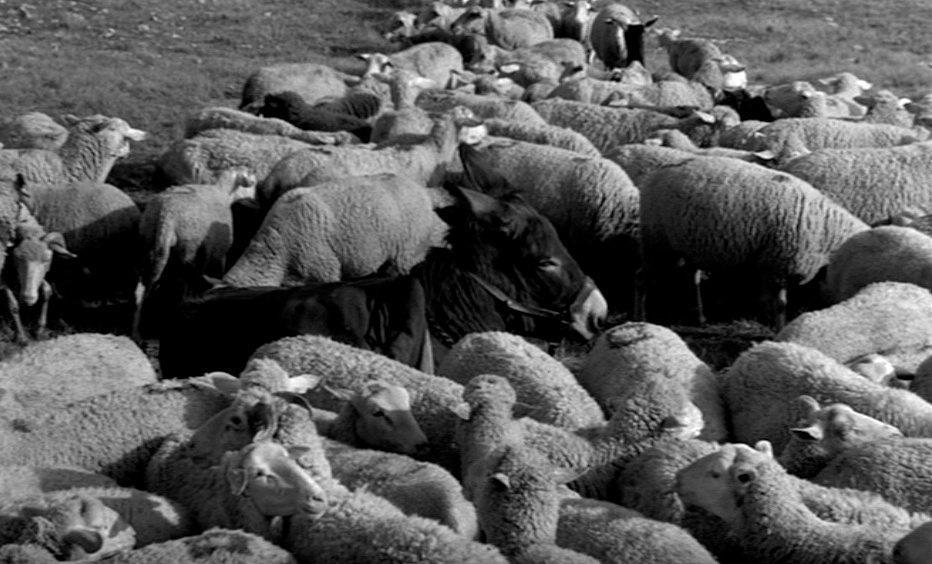 A weary, mortally-wounded Balthazar succumbs in a field, surrounded by fellow animals, away from those who have caused him so much suffering. The Schubert sonata fading into sheep bells on the soundtrack suggests a final moment of transcendence in one of the landmark shots in cinema.