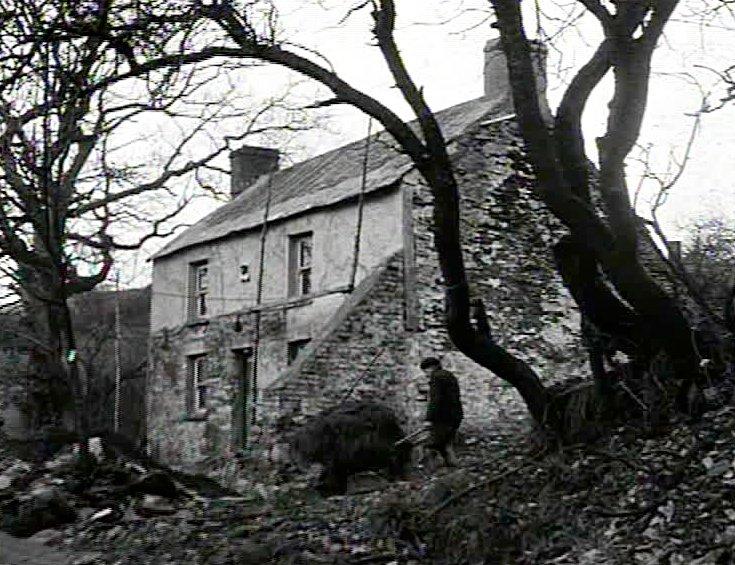 Borrowed Pasture (1960)