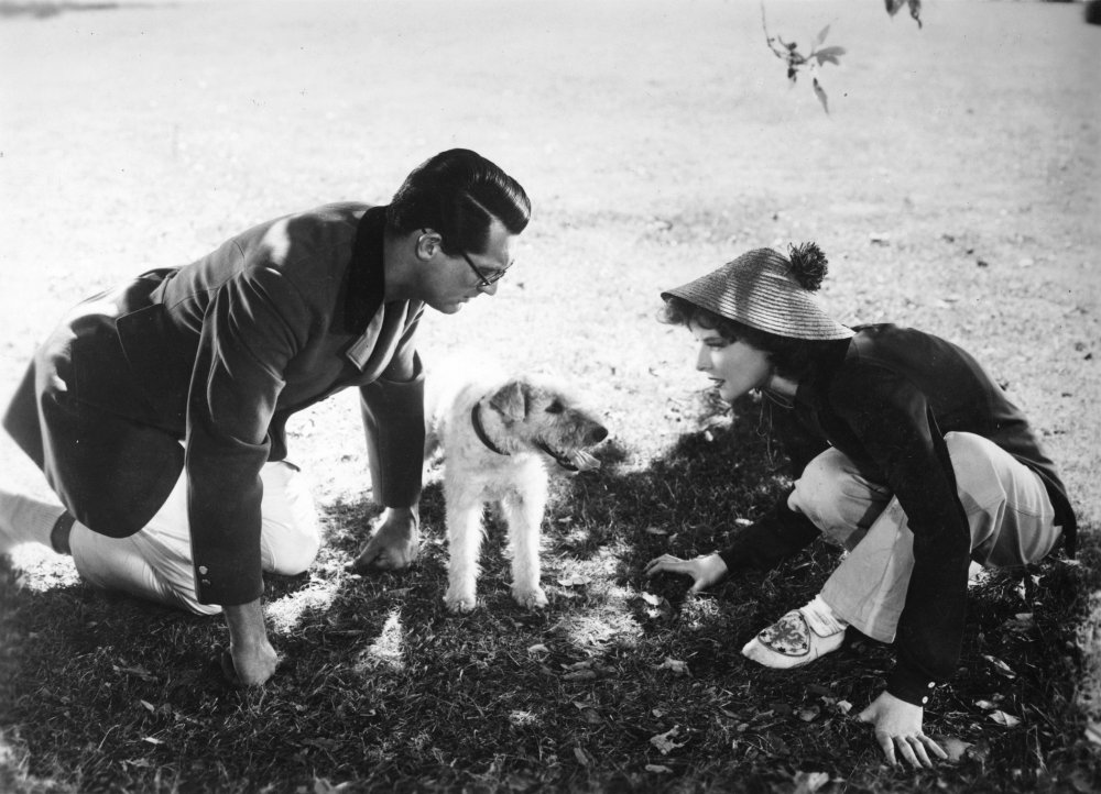 Positively the same dog: Skippy as, respectively, Asta in The Thin Man (1934), Mr Smith in The Awful Truth (1937) and George in Bringing Up Baby (1938)