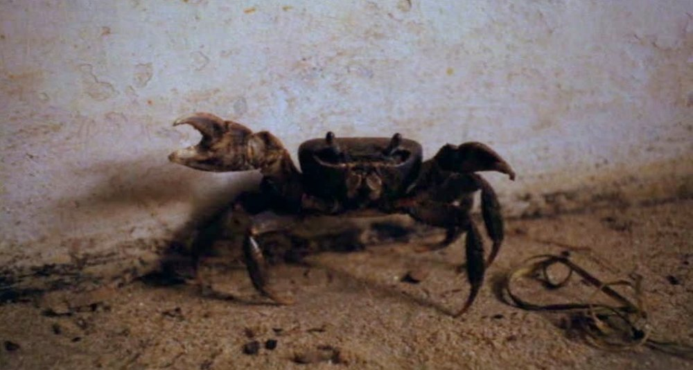 Giant crab in the 'room of crabs' scene in Cobra Verde (1987)