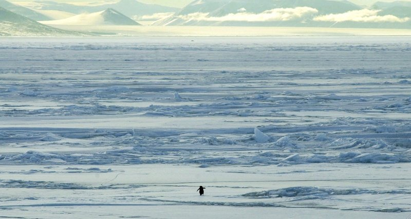 A lone penguin separated from its colony in Encounters at the End of the World (2007)
