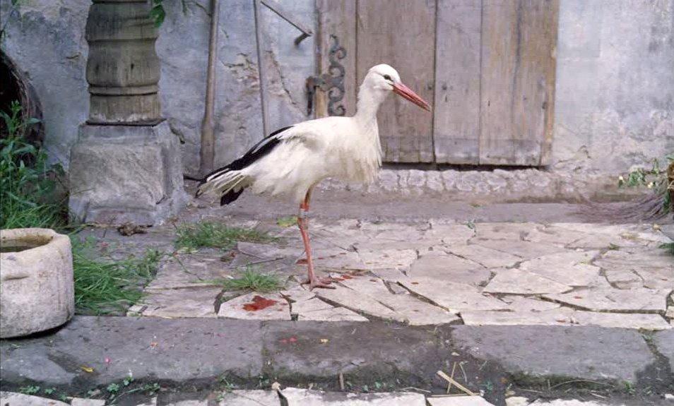 A stork in The Enigma of Kaspar Hauser (1974)