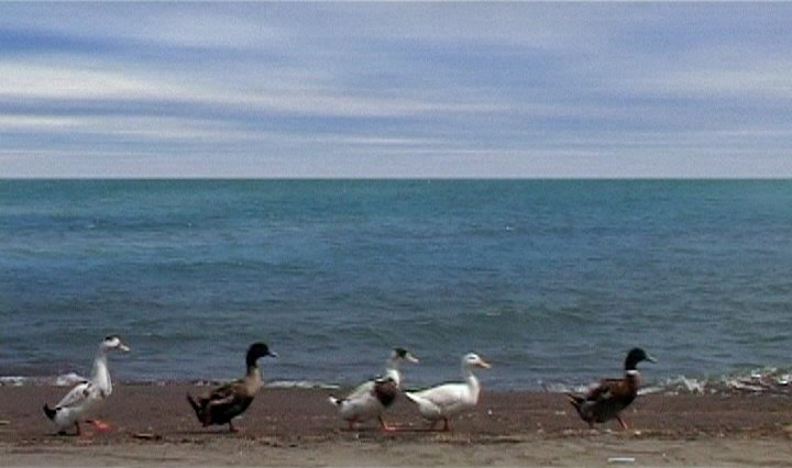 Five (aka Five Dedicated to Ozu, 2004)