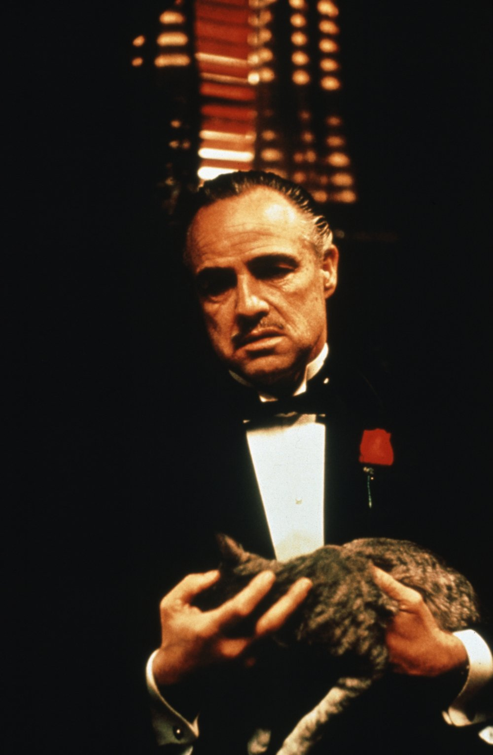Image result for the godfather cat scene