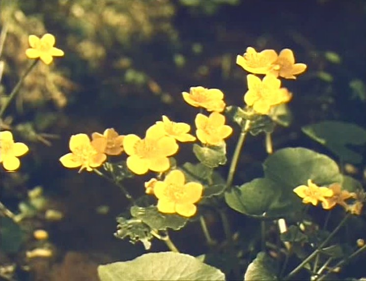Journey into Spring (1957)