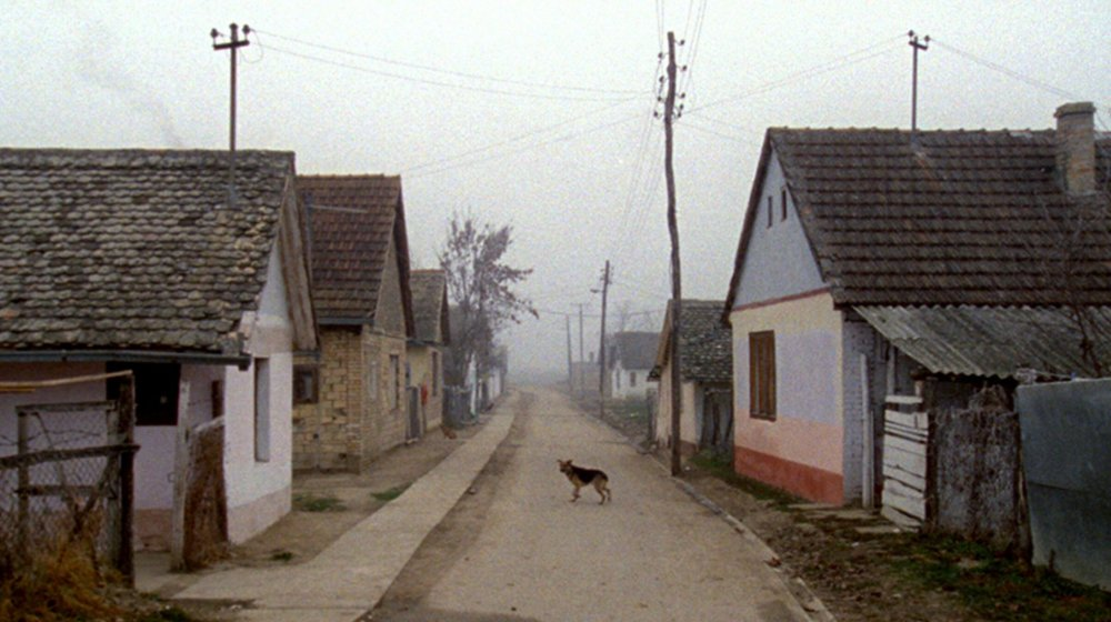 Karpotrotter (Karpopotnik, 2013)