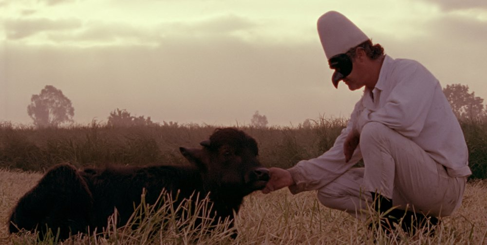 An orphaned buffalo calf's lament: Pietro Marcello's extraordinarily playful threnody Lost and Beautiful, a commingling of myth and memory