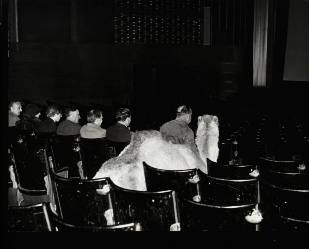 A camel attending a Lawrence of Arabia screening in Sutton in 1962.