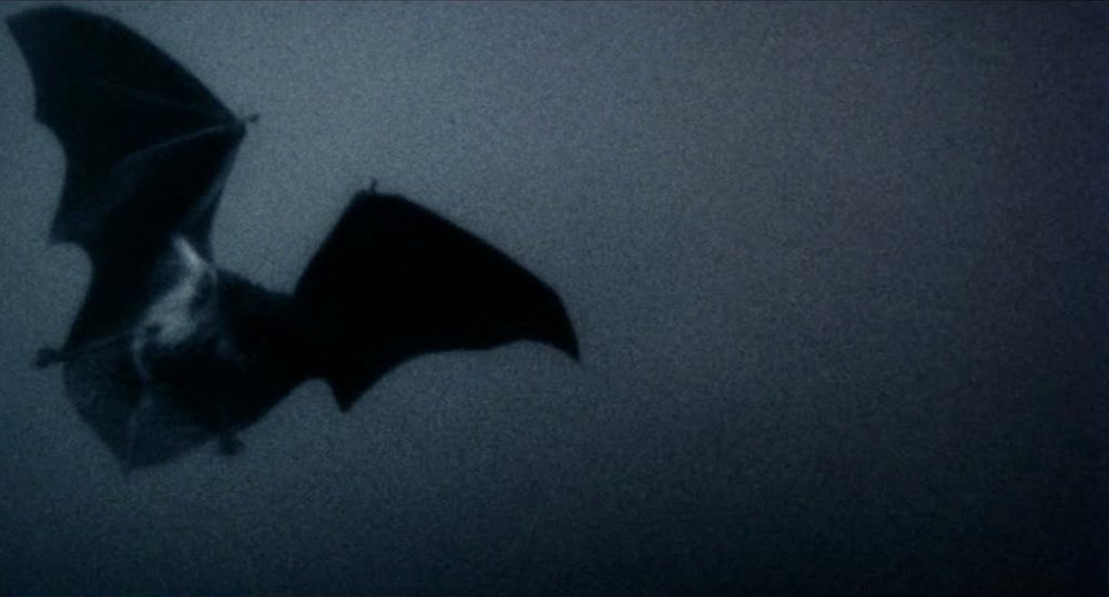 A bat in flight from Nosferatu the Vampyre (1979)