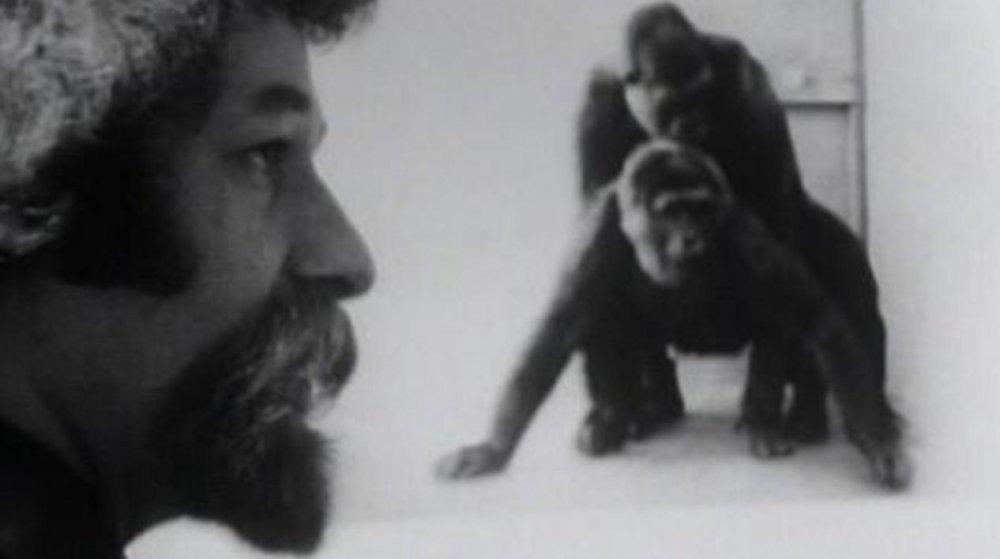 Primate (1974)