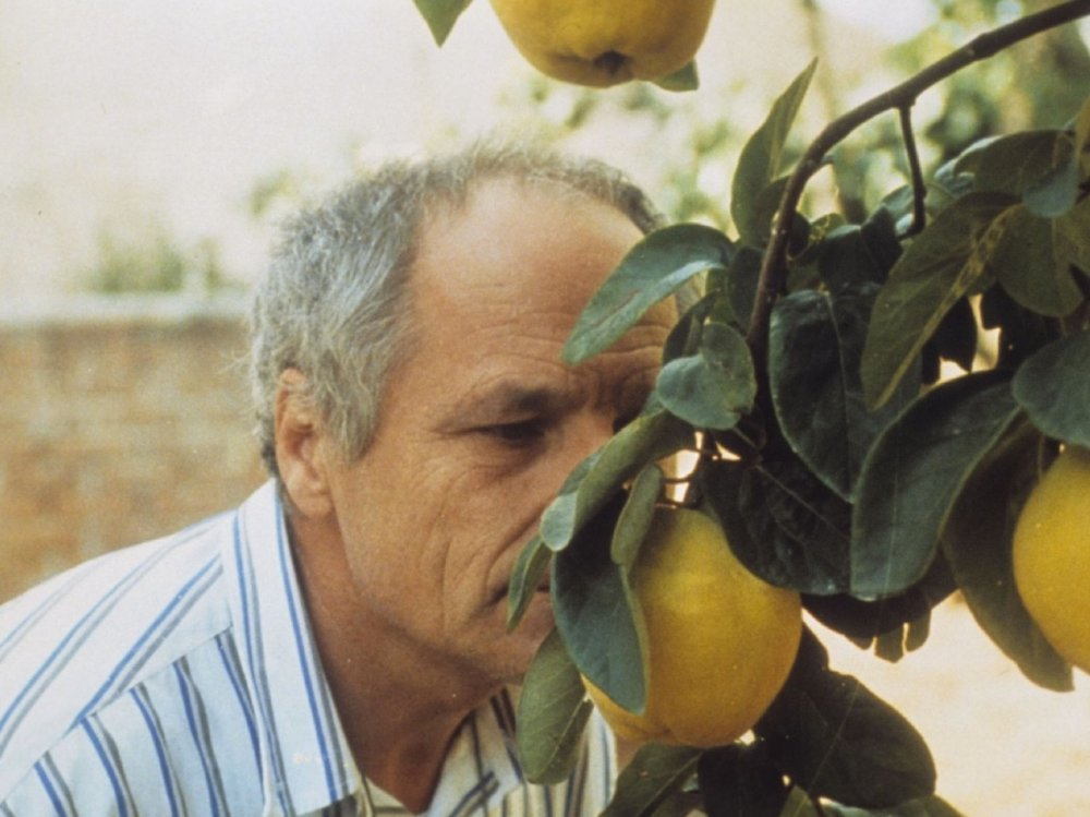 The Quince Tree Sun (1992)