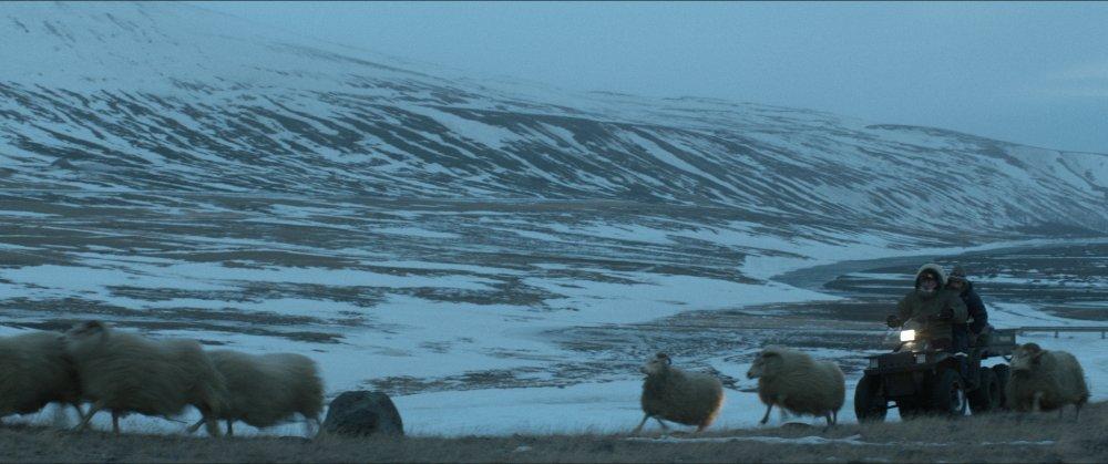 Rams (Hrútar, 2015)