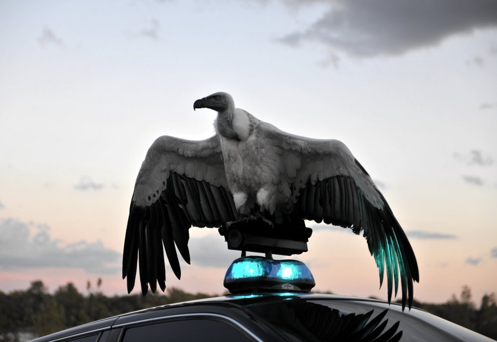 River of Fundament (2014)
