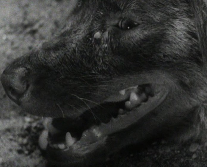 The credits unfold over shots of a panting dog, introducing the air of stifling, steamy intensity that pervades the film