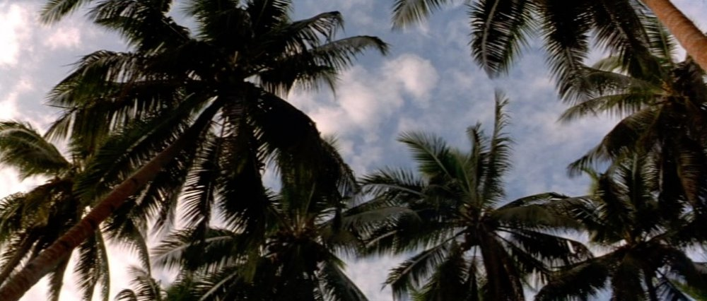 Paradise lost. Terrence Malick's meditative war epic regularly contrasts bountiful locations and the devastation wrought by foreign invaders – something too few of those involved can truly see