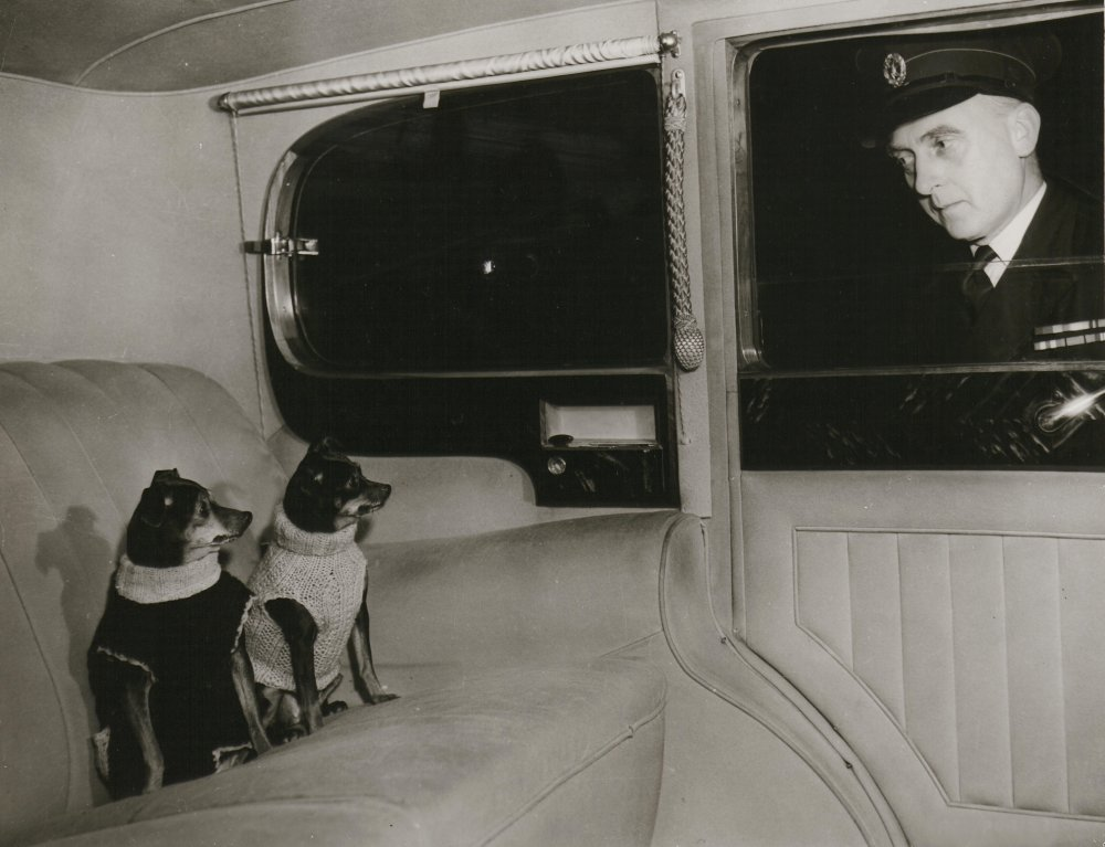 Regal treatment for The Third Man's canine actors