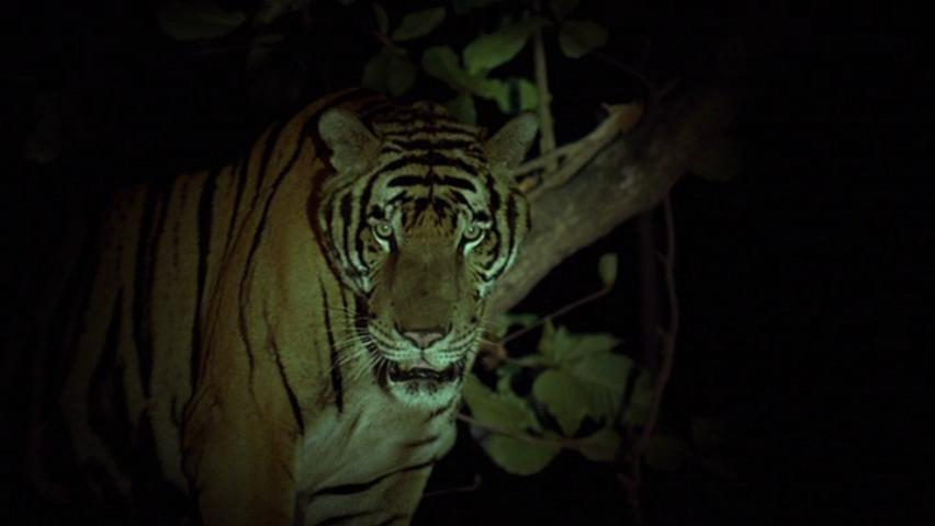 Tropical Malady (2004)