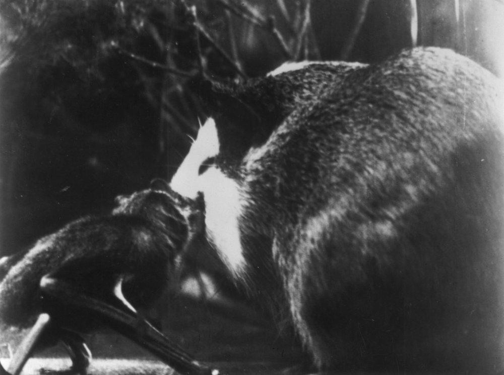 Le Vampire (1945)