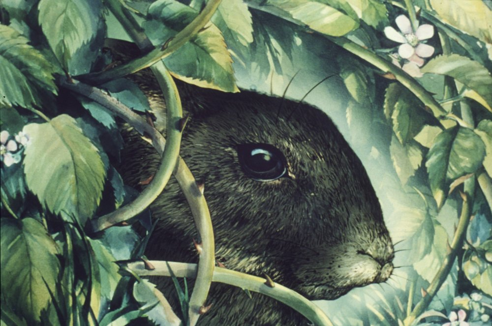 Artistic fodder… a rabbit (from Watership Down)
