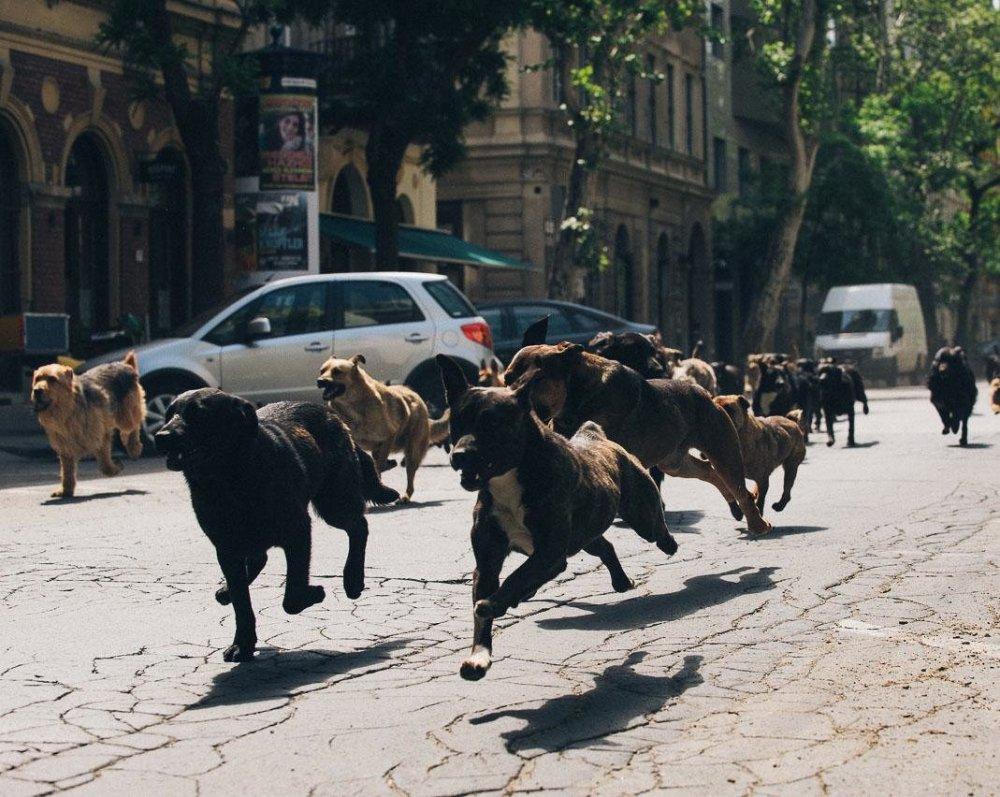 The dogs of war: Kornel Mundruczó's White God (Fehér Isten)