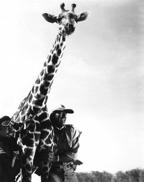 Howard Hawks's Hatari! (1962)