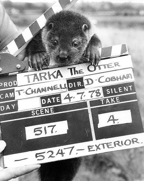 tarka the otter ending relationship