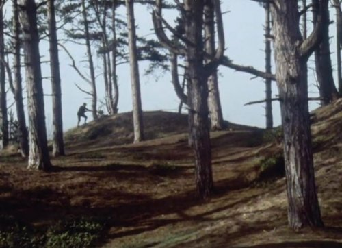Holkham Wood seen in A Warning to the Curious (1972)